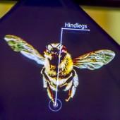 Pčela - hologram