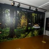 Tajanstvene šume