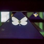 Leptir - hologram